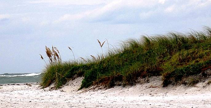 Ian  MacDonald - Where the Sea Wind Blows