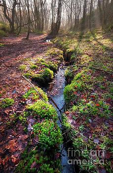Mariusz Talarek - Where the stream slowly flows....