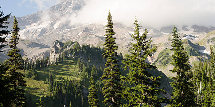 Where the treeline ends and the rugged peak of Mount Rainier begins. by Matthew MacPherson