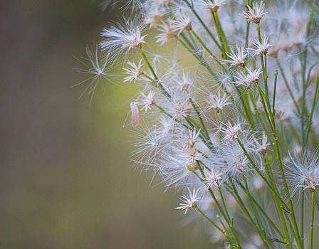 Whimsical weeds by Ruth Jolly