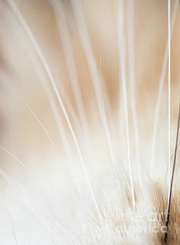 Whimsical Whiskers by John Janicki