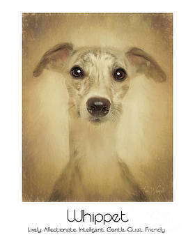 Whippet Poster by Tim Wemple