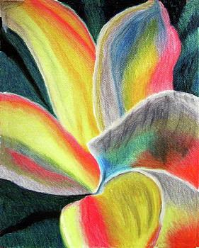 Whirling flower by Diane Paulhamus