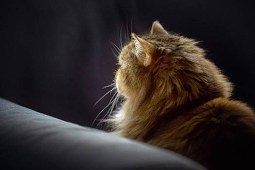 Whiskers in the morning light by Debby Herold