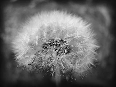 Whisper by Dawn Davis