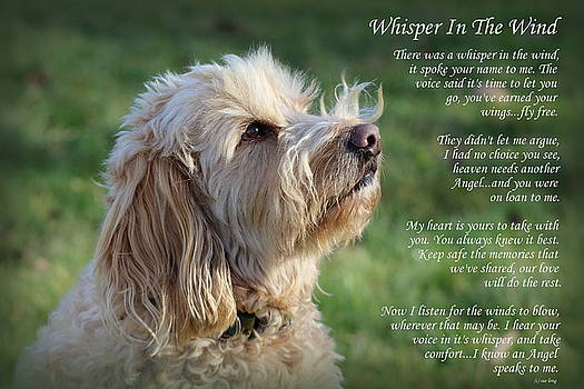 Whisper in the Wind Golden Doodle by Sue Long