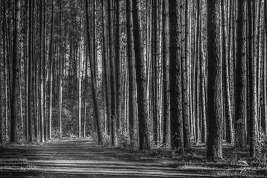 Pine Forest and Path Black and White by J Thomas