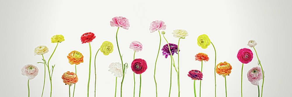 Whispering Spring by AugenWerk Susann Serfezi