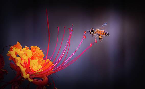 Whispering Wings 1 by Mark Dunton