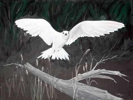 White Tern by Catherine Swerediuk