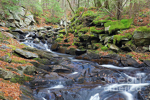 Whitcher Brook - Benton New Hampshire by Erin Paul Donovan