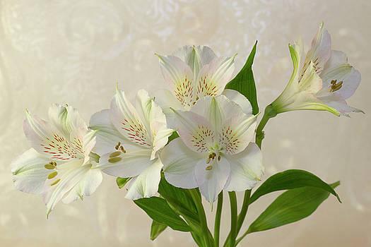 Sandra Foster - White Alstromeria Lily Flowers