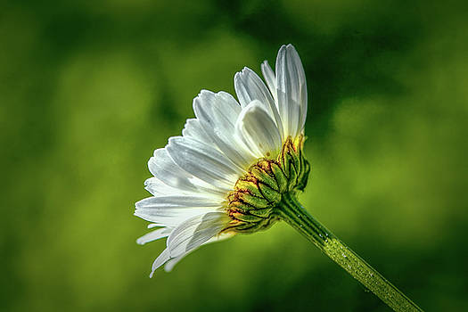 White And Green #h5 by Leif Sohlman