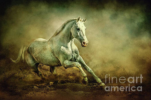 Dimitar Hristov - White Arabian Stallion Running In Dust