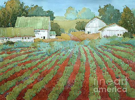 White Barns in Virginia by Joyce Hicks