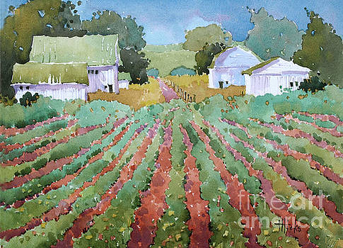 White Barns by Joyce Hicks