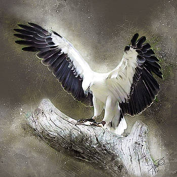 White Bellied Sea Eagle by Tom Schmidt