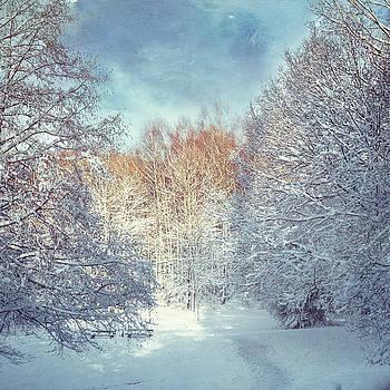 White Blanket - Winter Landscape by Dirk Wuestenhagen