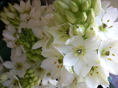 White Blossoms by Aleksandra Buha