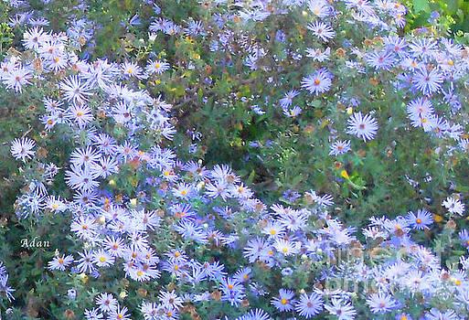 Felipe Adan Lerma - White Blue Cluster