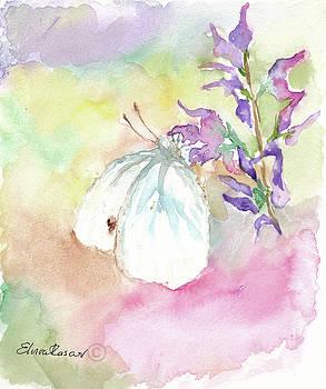 White Butterfly by Elvira Rascov