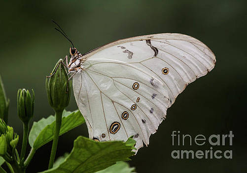 White butterfly surrounded by Green by Ruth Jolly