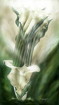 White Callas In Calla Vase by Carol Cavalaris