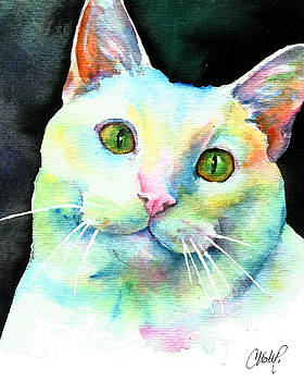 White Cat by Christy Freeman