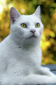 White Cat Portrait by Tyra OBryant