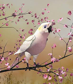John Junek - White Cockatoo