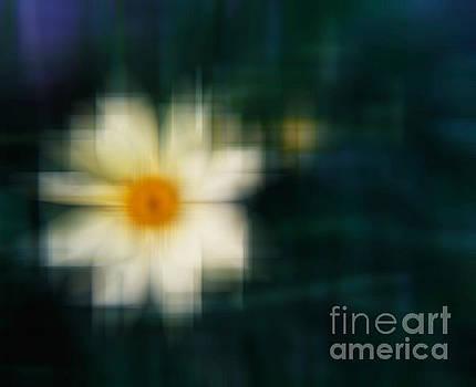 White Cone Flower Abstract by Emilio Lovisa