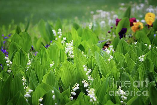 White Coral Bells by Karen Adams