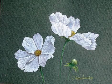Phyllis Howard - White Cosmos