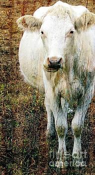White Cow I by Sharon Marcella Marston