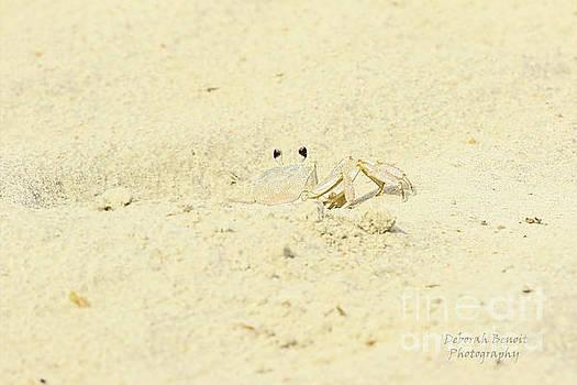 Deborah Benoit - White Crab