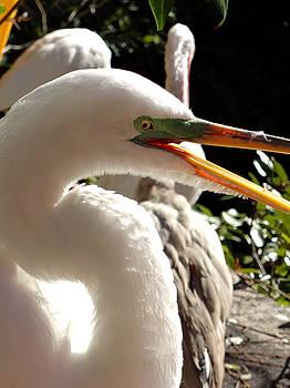 White Crane XL Closeup by Katy Hawk