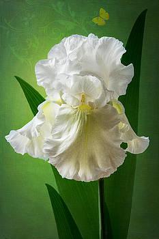 White Crown by Marina Kojukhova