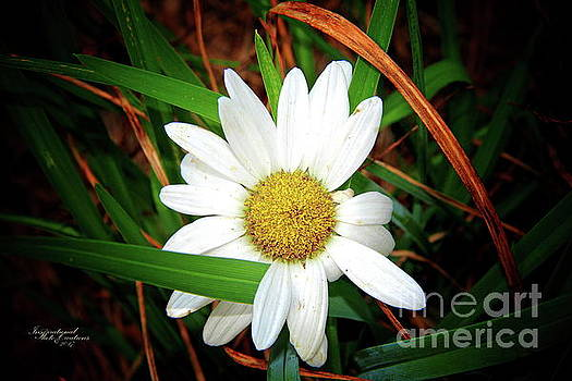 White Daisy by Inspirational Photo Creations Audrey Woods
