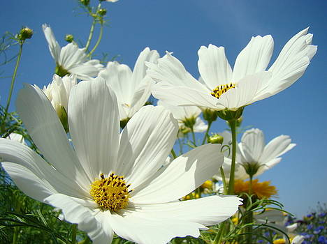 Baslee Troutman - White Daisy Flowers Fine Art Photography Daisies Baslee Troutman