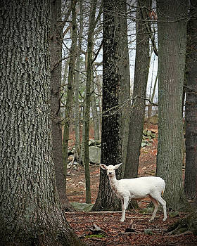 White Deer In Woodland Forest by Brooke T Ryan