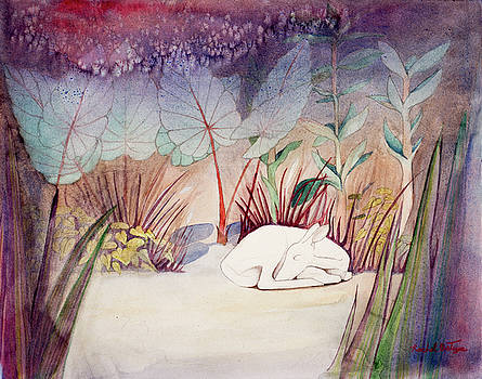 White Doe Dreaming by Rachel Osteyee