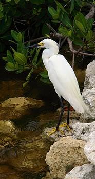 White Egret at Sanibel by Sheryl Unwin