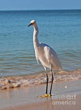 George D Gordon III - White Egret