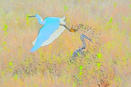 White Egret in Flight by Patricia Twardzik