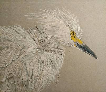 White Egret in full ruffle by Joan Mansson