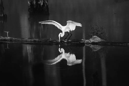 White Egret Reflection by Rod Flauhaus