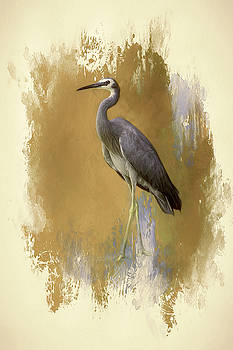 White-faced Heron. by Lyn Darlington