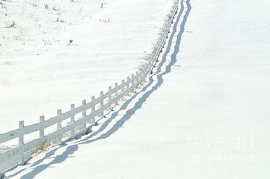 White Fence by Robert Nowland