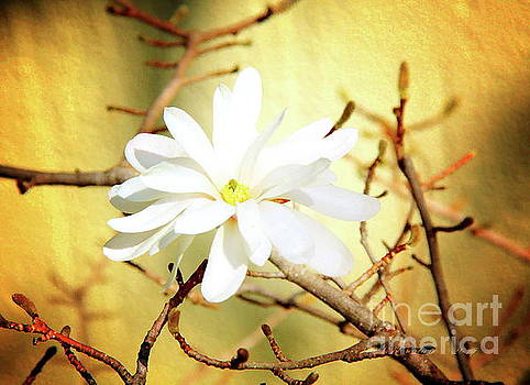 White Flower by Inspirational Photo Creations Audrey Woods