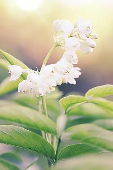 White flower by Iuliia Malivanchuk by Iuliia Malivanchuk
